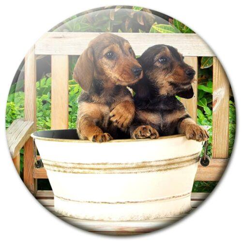 Kühlschrank-Magnete Hunde 5cm rund Dackel Teckel Dekoration 6er Set