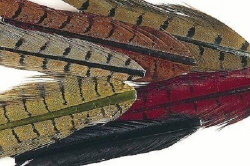 Gordon Griffiths Faisan Anneau cou Centre Queues Mixte Pack de 6 couleurs