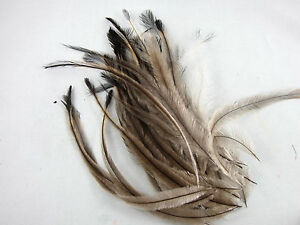EMU FEATHERS - Natural and Colors -- Fly Tying