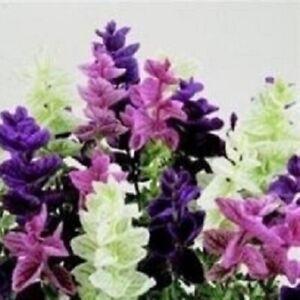200 Romantic Purple mustard seeds home garden fence decor fantasy Purple Flower