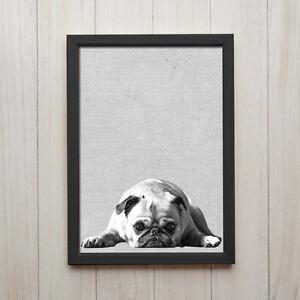 mops hund schwarz wei kunstdruck poster a4 tier foto geschenk deko bild druck ebay. Black Bedroom Furniture Sets. Home Design Ideas