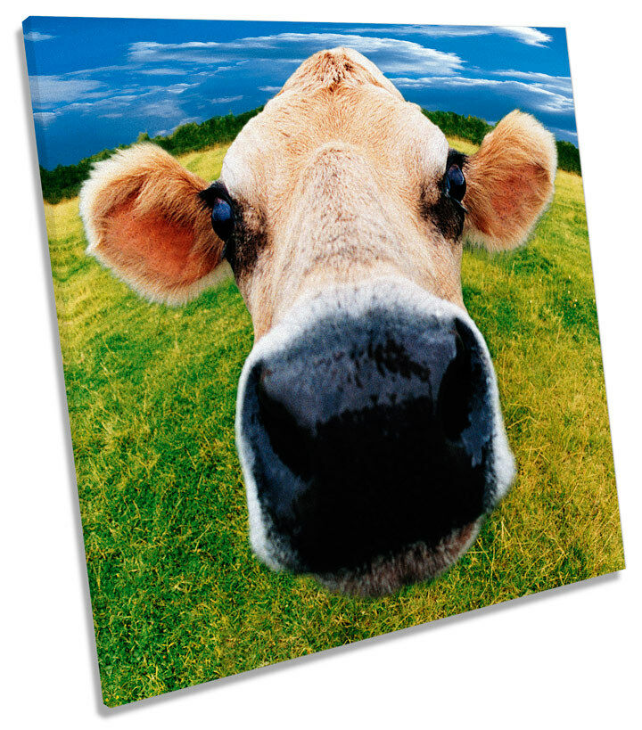 Cow Funky Face Farm SQUARE BOX FRAMED CANVAS Kunst Bild