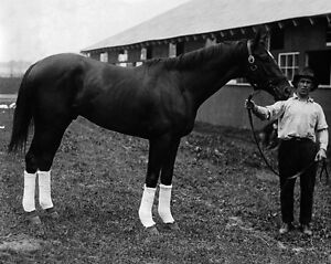 1920-Champion-Racehorse-MAN-O-WAR-Glossy-8x10-Photo-Print-Thoroughbred-Poster