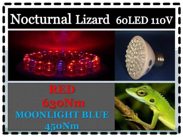 Night Lizard Reptile PET 60LED Moonlight Blue Red Light Bulb 110V E27 USA Cert