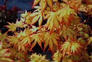 Vivaio Acero Rosso : Fiori dal vivaio foto di l acero rosso sacile tripadvisor