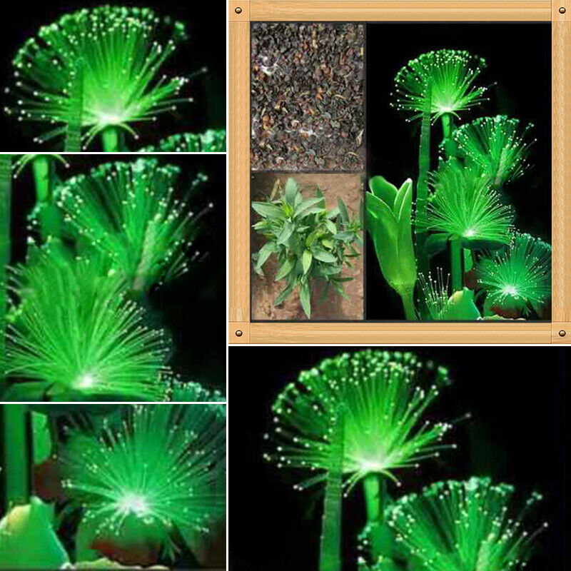 100pcs Rare Emerald Fluorescent Flower Seeds Night Light Emitting