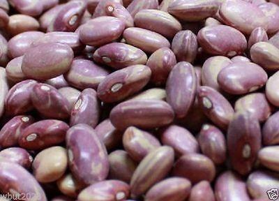 50 Organic Bean, Flor de Mayo Bean . Organically Grown Heirloom Seeds !