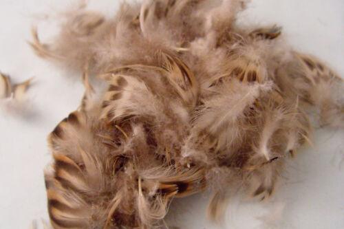 2g Plumes de POITRAIL CANE mallard hen chest feathers montage peche fly tying
