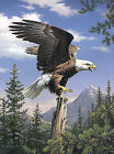 Reeves Medium Painting by Numbers Artist Collection PBNACM3 Screaming Eagle