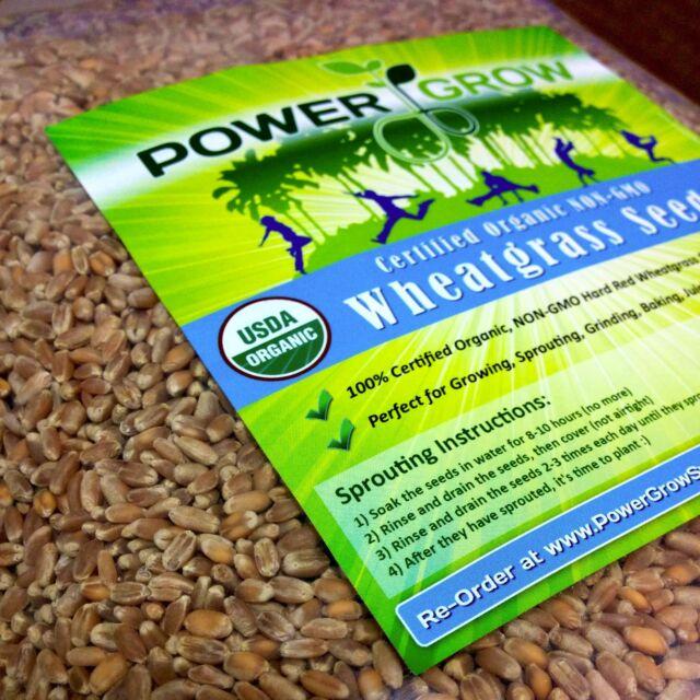 Sage Salvia Officinalis 100 seeds Certified Organic Seed USA GROWN Seed