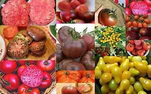 Tomaten-Paket-Set-3-7-15-Sorten-zu-je-10-Samen-aus-15-Sorten-frei-waehlbar