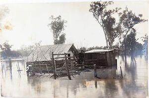 RARE-c1920-GOONDIWINDI-FLOODS-REAL-PHOTO-POSTCARD-MICKS-HOUSE-IN-THE-FLOOD-034