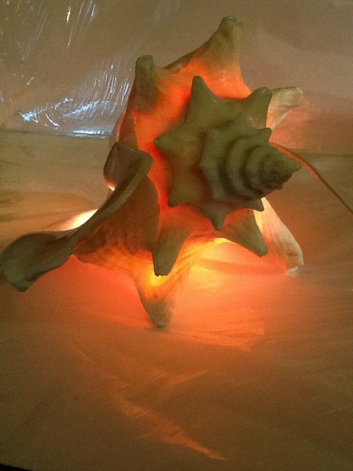 Unique Real Conch Shell Electric Nightlight Table Lamp Mood Light