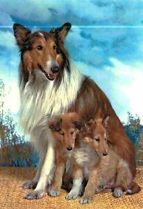 SCHLEICH 16840 Border Collie 6 cm Serie Cani e Gatti