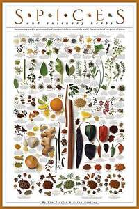 Details about SPICES AND CULINARY HERBS ART PRINT cuisine cooking  informational poster chart