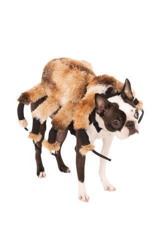 Giant Spider Dog Fancy Dress Arachnid Creepy Plush Deluxe Pet Halloween Costume