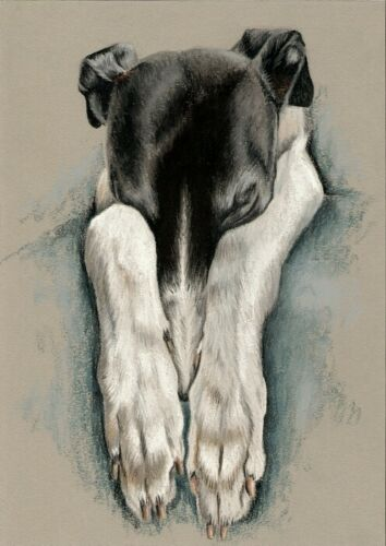 Greyhound    A4  LIMITED   PRINT #  42 Galgo Espanol Levrier Windhund