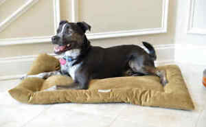 Armarkat-Soft-Velvet-Cat-Dog-Pet-Bed-Mat-Washable-Sage-Green-MEDIUM