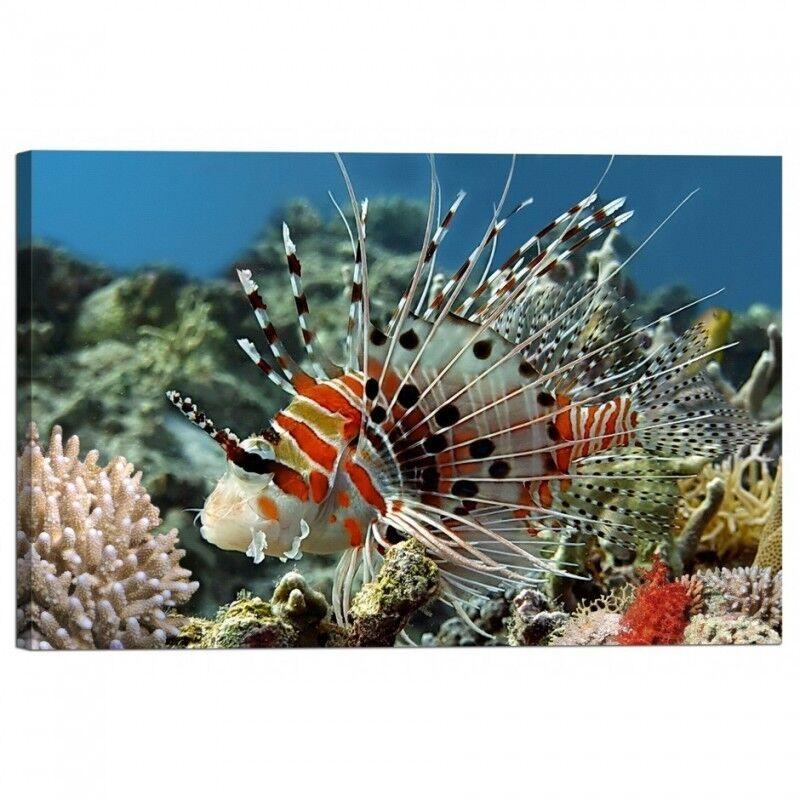 Quadro Stampa su Tela con Telaio Pesce Pesce Pesce Spotfin lionfish   élégant    Attrayant De Mode    Outlet Store  2cdff5