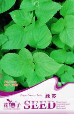50 Original Pack Seeds Crisped Green Perilla Seeds Perilla Frutescens D003