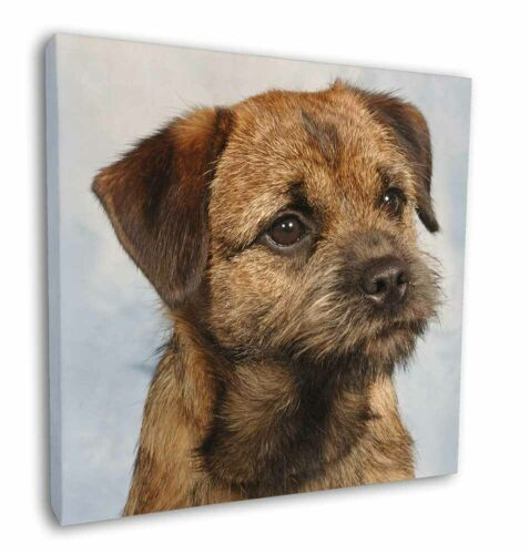 "Picture Print AD-BT2-C12 Border Terrier 12/""x12/"" Wall Art Canvas Decor"