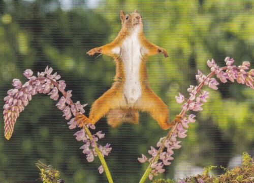 Eichhörnchen auf Blütenzweig Ansichtskarte Ich halt die Balance Squirrel