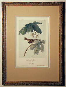 Other Antique Decorative Arts A Swamp Sparrow By Audubon Big Clearance Sale