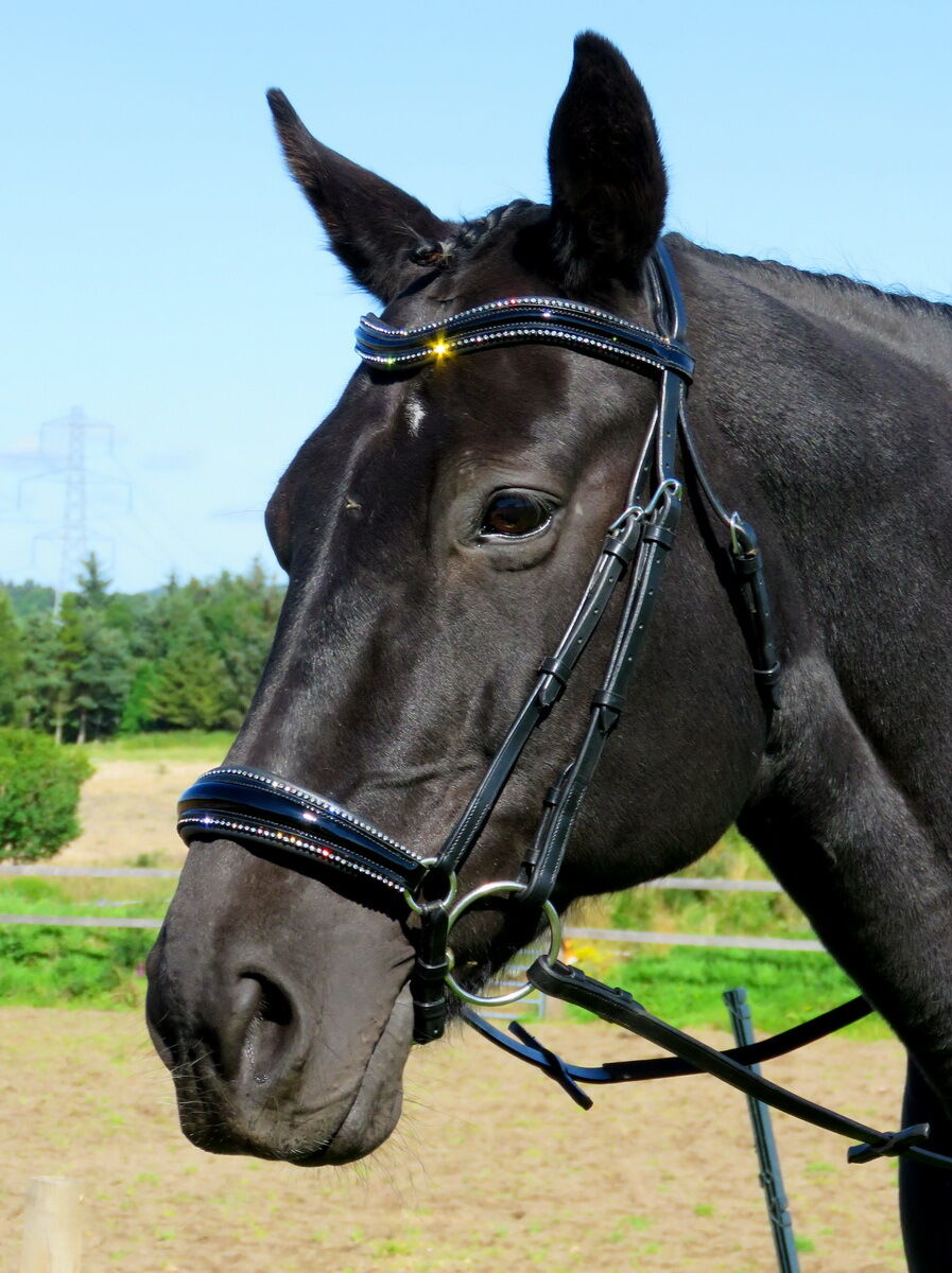 FSS STELLAR Curve CRYSTAL PIPING EDGE FREEFORM Comfort DROP NOSE PATENT Bridle