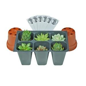 SucCuteLents-Assorted-6-Pack-Live-Succulent-Plants-Fully-Rooted-Plugs-in-Tray