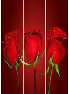 8042-Raumteiler-Roses-Paravent-Trennwand-Sichtschutz-Hofmann-2-Motive