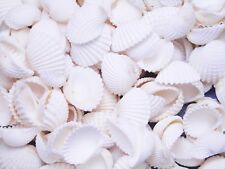 "1 Lb Bulk Tiny Dyed Coquina Shells Seashells Craft Colorful 1//4-1//2/"" Beach Deco"