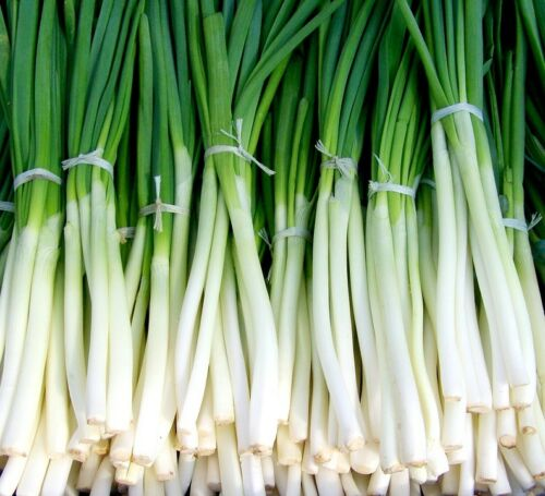 100 bunching onion seed