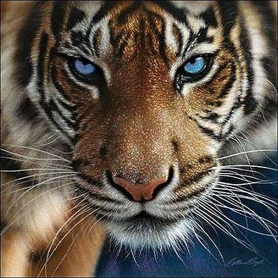 Blue Eyes Keilrahmen-Bild Leinwand Tiger Augen Raubkatzen Colin Bogle