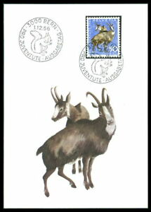 Belle Suisse Mk 1966 Faune Delanoë Chamois Chamois Chamois Carte Maximum Maxi Card Mc Cm M981-afficher Le Titre D'origine ModéLisation Durable