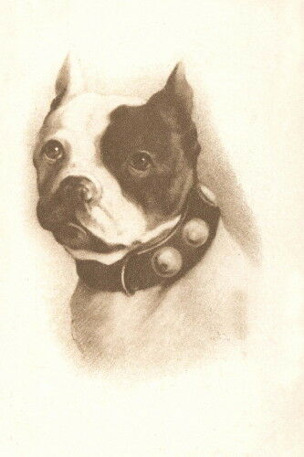 1900s Photo Boston Terrier PuppyDog DogsStudded Collar NEW Large Note Cards