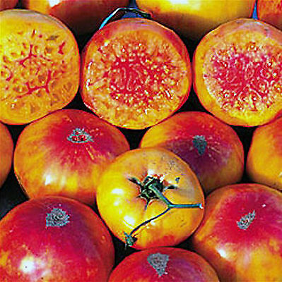 RARE 12 graines de Tomate HILLBILLY Potato Leaf - Tomate ancienne bicolore