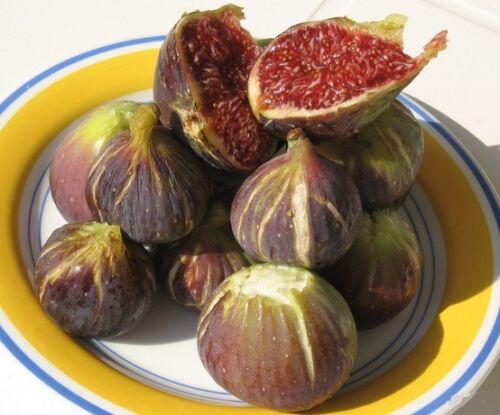 LUNXI 4 fig tree cuttings