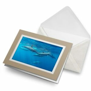 Greetings-Card-Biege-Dolphins-Mauritius-Whale-Dolphin-Ocean-24242