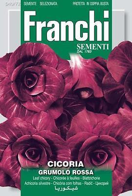 Samen Semillas Chicory Grumolo Rosso 25+ seeds Graines