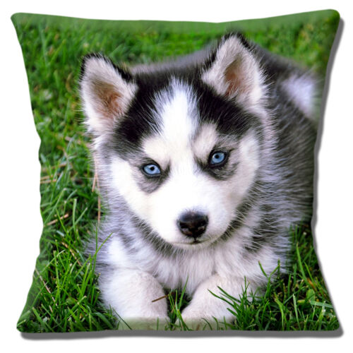 """Husky Puppy Dog Cushion Cover 16/""""x16/"""" 40cm Photo Print Cute Pup with Blue Eyes"""