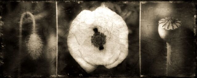 Create A  Custom Size Tintype Up To 6