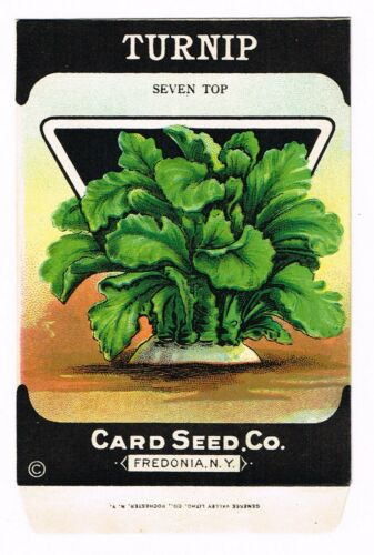VINTAGE SEED PACKET 1920 GENERAL STORE FREDONIA NEW YORK TURNIP SEVEN TOP