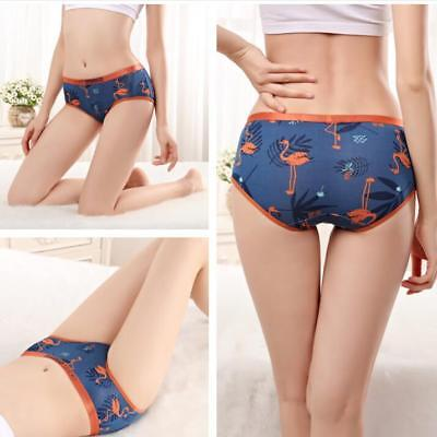 Women/'s underwear panties size large Wonder Woman new with tag