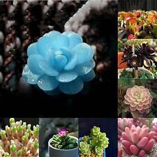 Potted plants Flowers GTeds Succulents Radiation protection Office Desktops  GT1