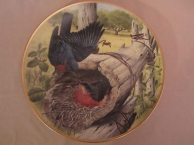 photo of bluebird eggs