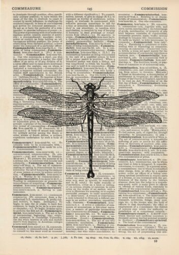 Dragonfly 2 Dictionary Art Print Animal Vintage Illustration Wildlife Zoo
