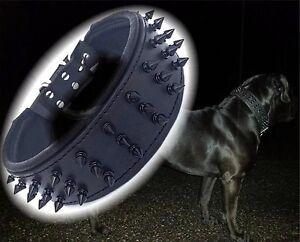 Goujons de tueur à collier géant noirs 6,5cm de large pit-bull Molosser Dogo Dogue Allemand