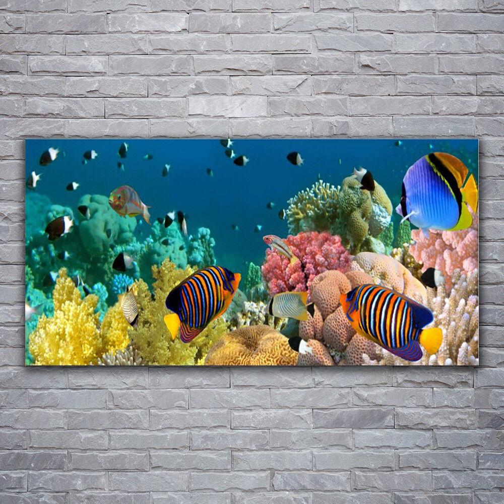 Wandbilder Glasbilder Druck auf Glas 120x60 Korallenriff Natur