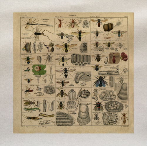 Vintage insectes araignées Fly Imprimé Tissu Panneau faire un coussin d/'ameublement Artisanat