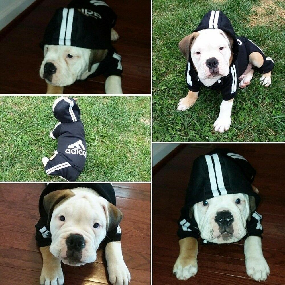 New XS-3XL Pet Winter Coat Dog Warm Clothing Casual Cat Puppy Hoodie Sweater 3